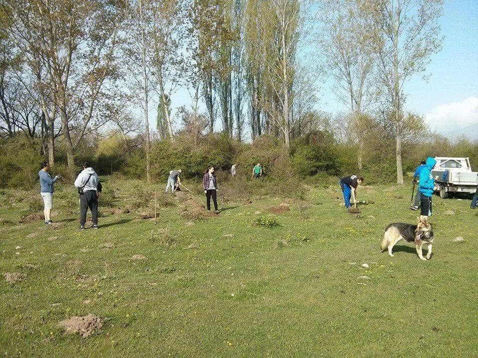 120 дръвчета посадиха край Горно Сахране Публикувано в Pavelbanya.eu