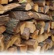 Над 100 дръвчета залесиха край Павел баня Публикувано в Pavelbanya.eu