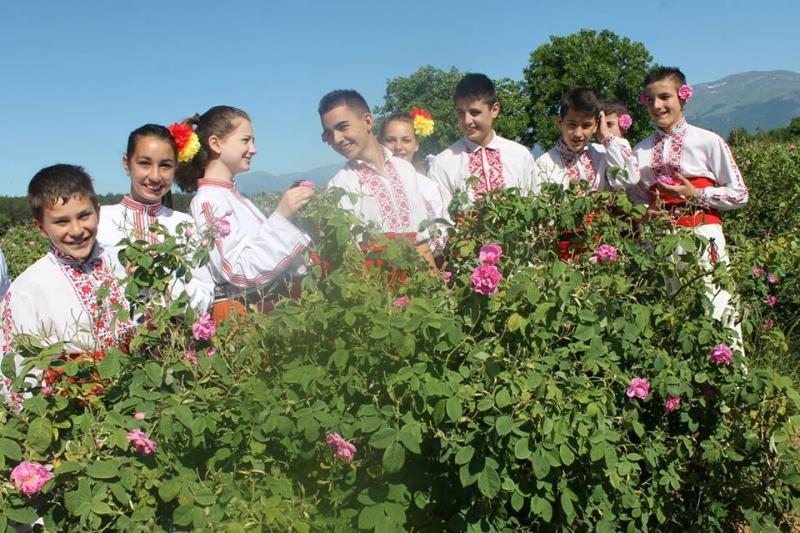 В Казанлъшко искат до 4 лева за килограм розов цвят Публикувано в Pavelbanya.eu